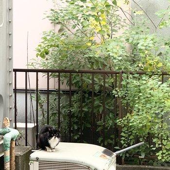 なんとネコちゃんがご挨拶に来てくれました!(と言うわりには、めちゃくちゃガンとばされてますが笑)