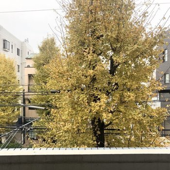 綺麗なイチョウな木が見え季節を感じられますね。