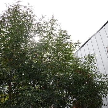 目の前の眺望はありませんが、見上げれば緑豊かな木と空が…!