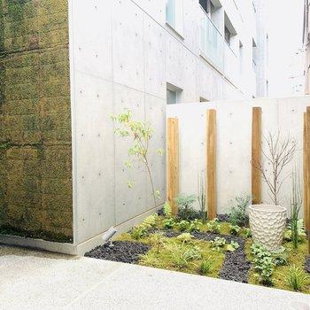 コンクリートの壁と植栽の掛け合いが素敵。