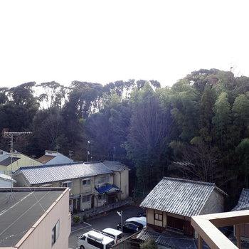 木々と空がよく見えるのです!