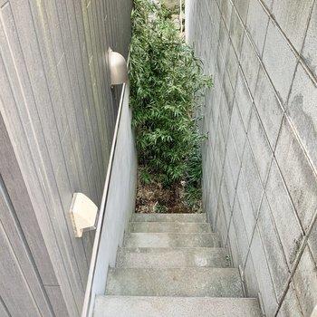 右には竹が生えています。