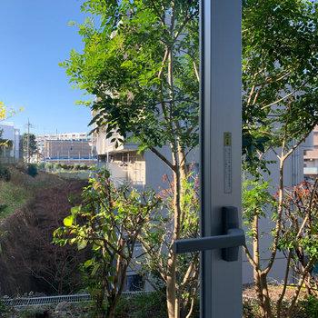 眺望です。近隣のマンションやグリーンが見えます。