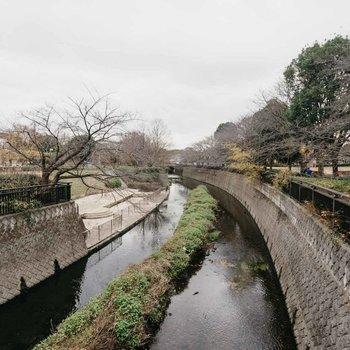公園の中には川が流れていて、両側に桜の木が!春が楽しみ。
