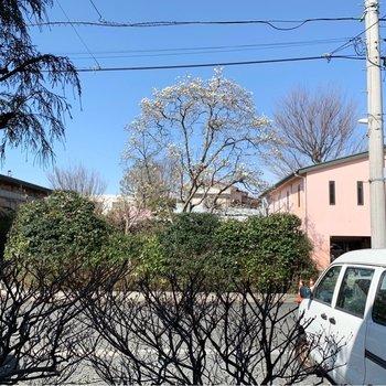 小窓からは木蓮の木が見えました。