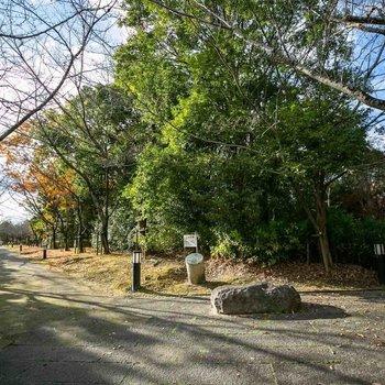 団地を囲むように広がる水晶山緑地はお散歩にぴったり。