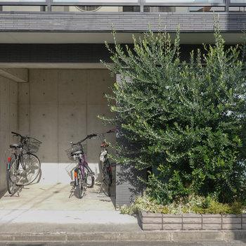 色鮮やかに生い茂った緑の横にはコンクリ打ちっぱなしの自転車置場。