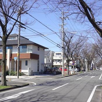 建物の前の道路は並木が美しい道路。散歩が楽しそうです。