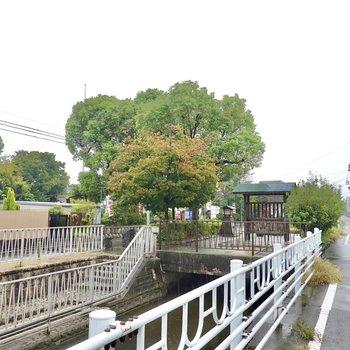 近くを用水路が流れていて、そのほとりに緑がいっぱいの神社が。ちょっとした散歩や気分転換に良さそう◎