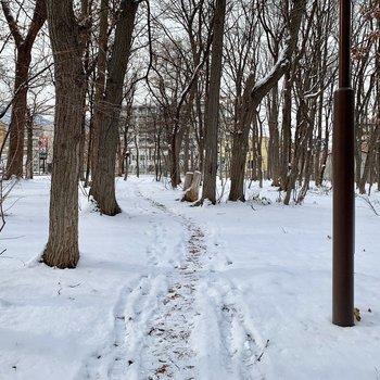 林道を通ると駅までの近道に、、