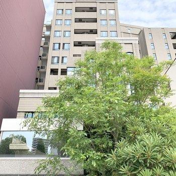外観から洒落た雰囲気の11階建て鉄骨鉄筋コンクリートマンションです。