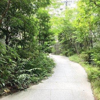 アプローチは街中とは思えない緑あふれる空間。