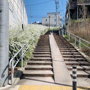 お部屋から駅までの道には素敵なお花が咲く散歩道も。