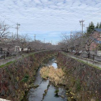 桜の有名な山崎川がすぐ近くです。