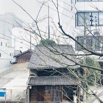 一階の木がココまで伸びてきていますね。