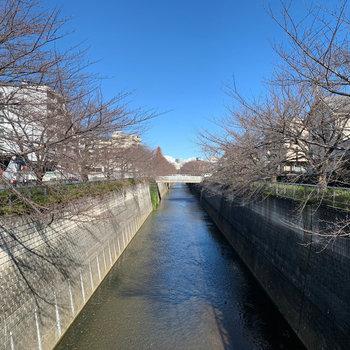 歩いて2分ほど、石神井川です。春は桜が咲くんです。