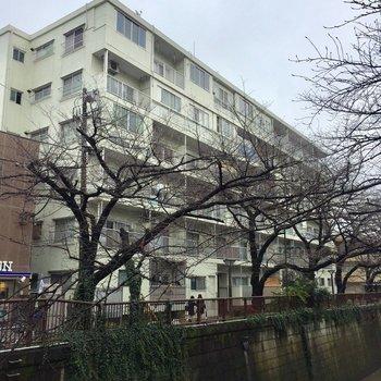 目黒川沿いに建つ、大きなマンションです。