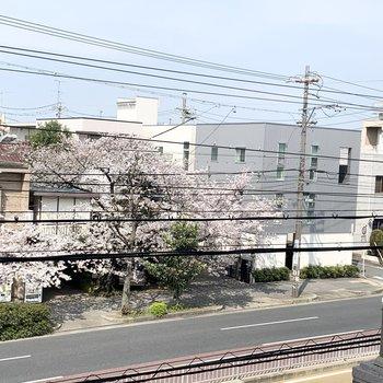 共用廊下から桜が綺麗に見えました◎
