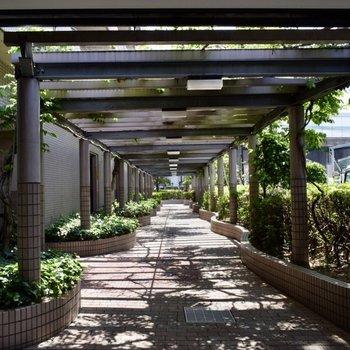 マンションの入り口は緑のカーテン!木漏れ日を浴びる毎日、なんて羨ましい・・。