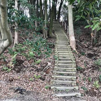 ちなみにその隣には小笹東緑地に繋がるであろう階段が。わくわく