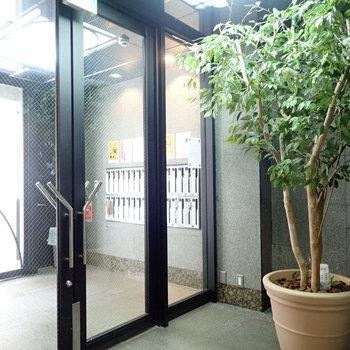 共用部】入り口には大きい観葉植物!
