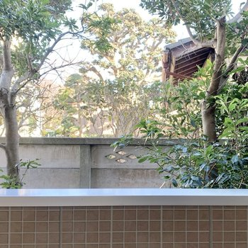 廊下側の窓からはお隣さんのお庭。