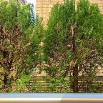 眺望は優しい緑。高さもあるので、防犯対策にもなります。
