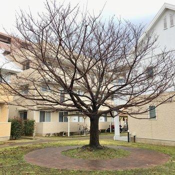 お部屋の前にある大きな木。春になったら何の花が咲くのかな〜?