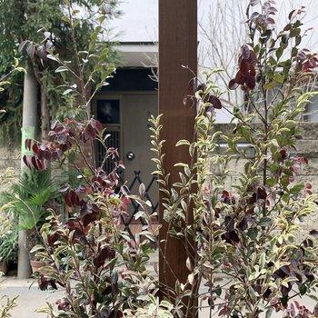 植物で目隠しがされています。