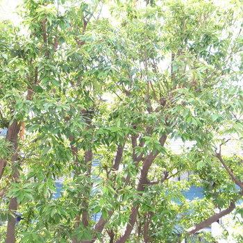 眺望は青い空じゃなくて、みどりの常緑樹。目隠しにも一役買ってくれてて◎