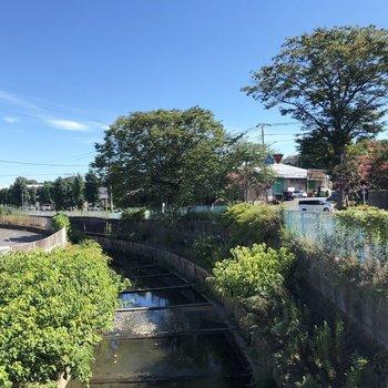 バス停から、この小川をこえてお部屋まで。