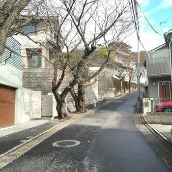 アパート横の坂には桜の木。春になるのが楽しみだ。