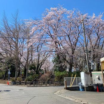 スーパーの裏の公園は桜が綺麗でした。やっぱり良い雰囲気の街並みだ。
