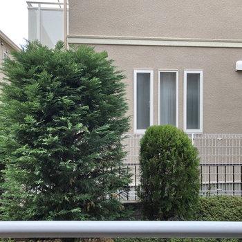 窓からは緑とお向かいのお家が見えました。