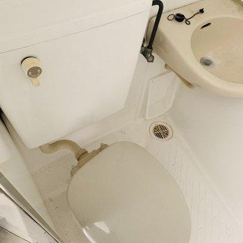 コロンとしているおトイレ。