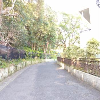 この道をまっすぐ行くと動物園側。動物の鳴き声が聴こえてきたり…!