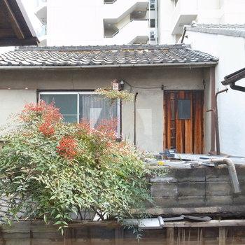 【2F洋室(階段隣)】昔ながらのお隣さんのおうちと、赤い実をつけた緑の眺望。もはや絵画です。
