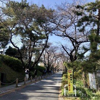 近くに青山霊園があり、春には桜が咲き誇ります。