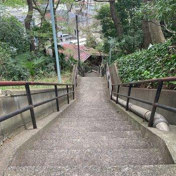 ちなみにこれが百段階段。登りはけっこうな運動になりそうでした……!