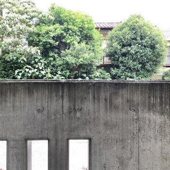 目の前には塀があり、奥には緑も見えます。