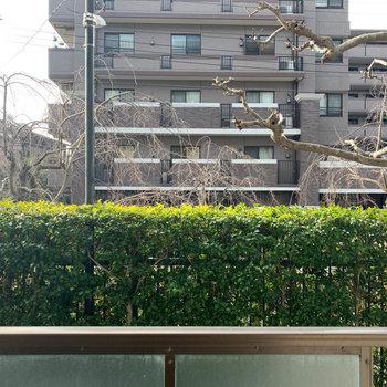 眺望は策と、植え込みを挟んで向かいのマンションが見えます。