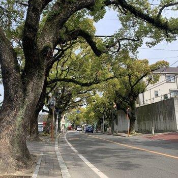駅までの道中は香椎参道に続くクスノキ並木。この雰囲気がとても素敵。