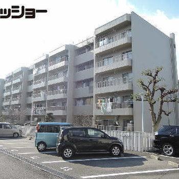 桃山住宅6号棟 103号室