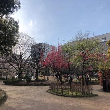 近くの大きな公園です。