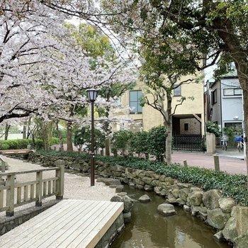 お部屋の近くには小川も流れています。桜が綺麗です。