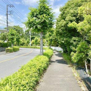お部屋までの道のり。自然豊かでちょっとした緑道のようです。