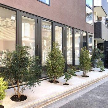 玄関は横並び。綺麗に植樹されています。