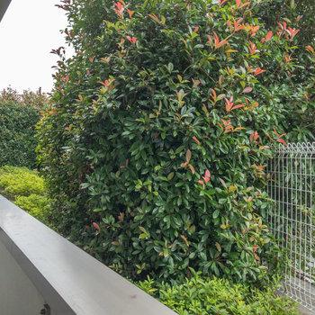 1階にあるお部屋ですが、フェンスや植木があるので防犯面では安心できそうです。