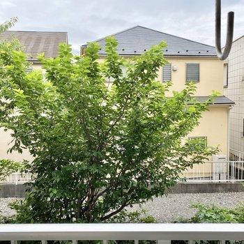 眺望は緑と向かいの建物です。