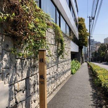 お部屋は桂坂の通り沿いにあります。